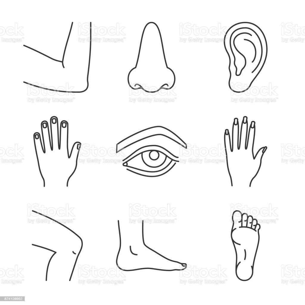 Menschliche Körperteile Symbole Stock Vektor Art und mehr Bilder von ...