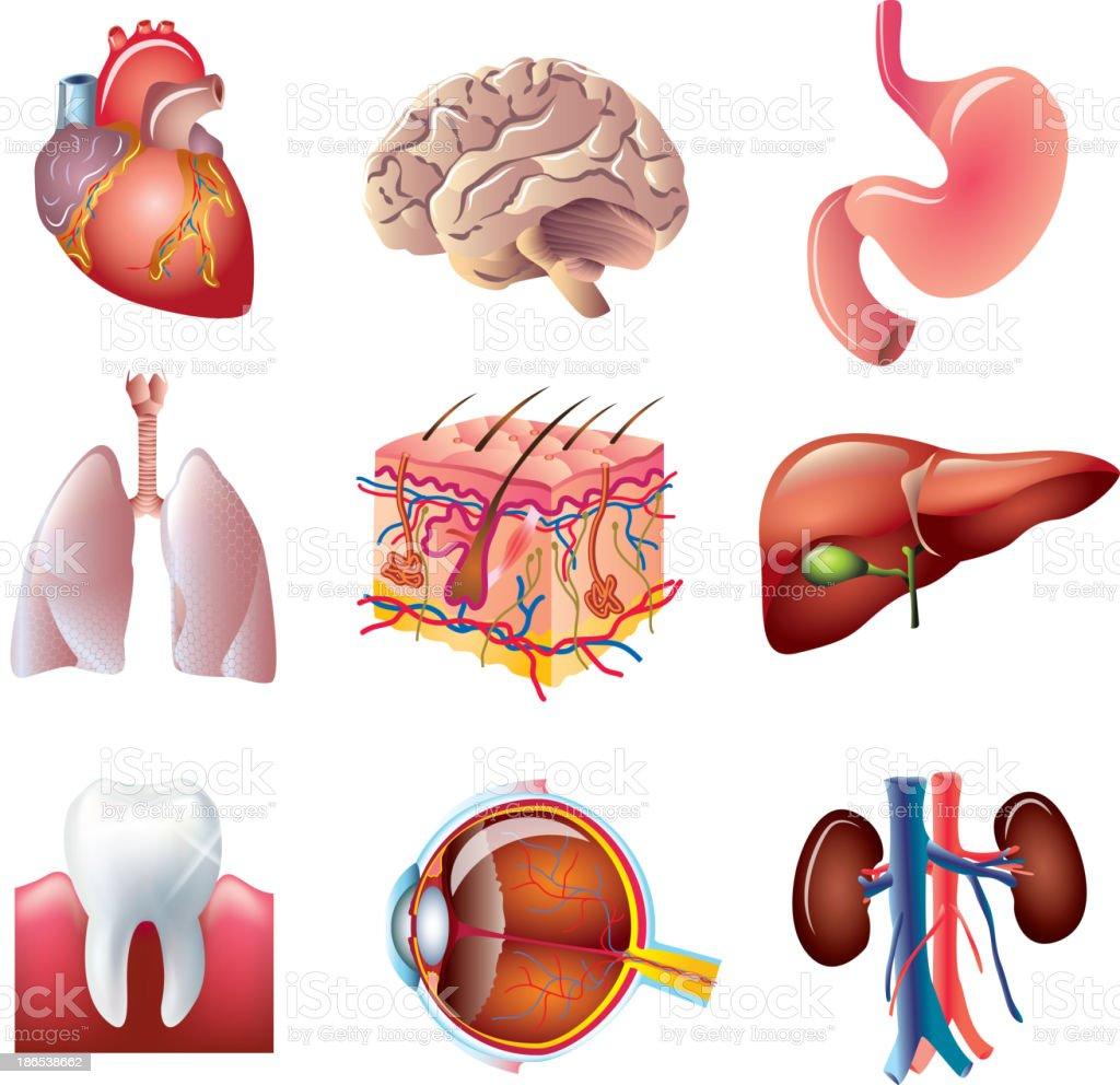 Human body parts set vector art illustration