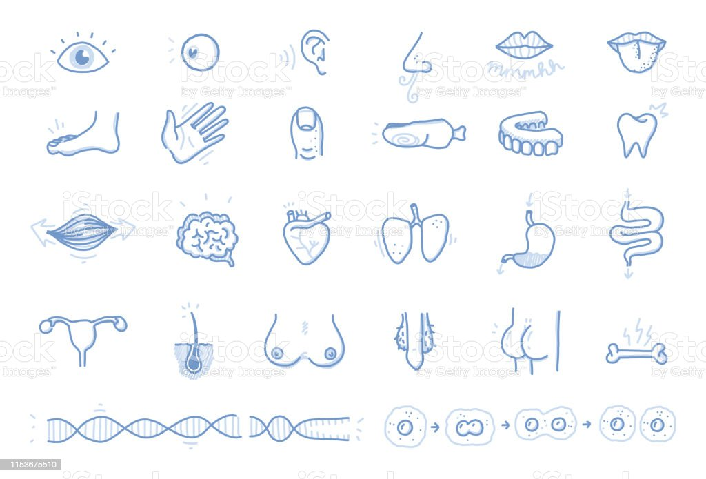 Set of selected human body parts - handmade Graphic Recording Style...