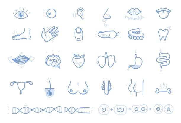 Menschliche Körperteile-Vector Icon Set – Vektorgrafik