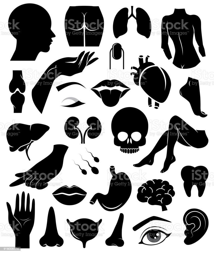 body elements silhouette.