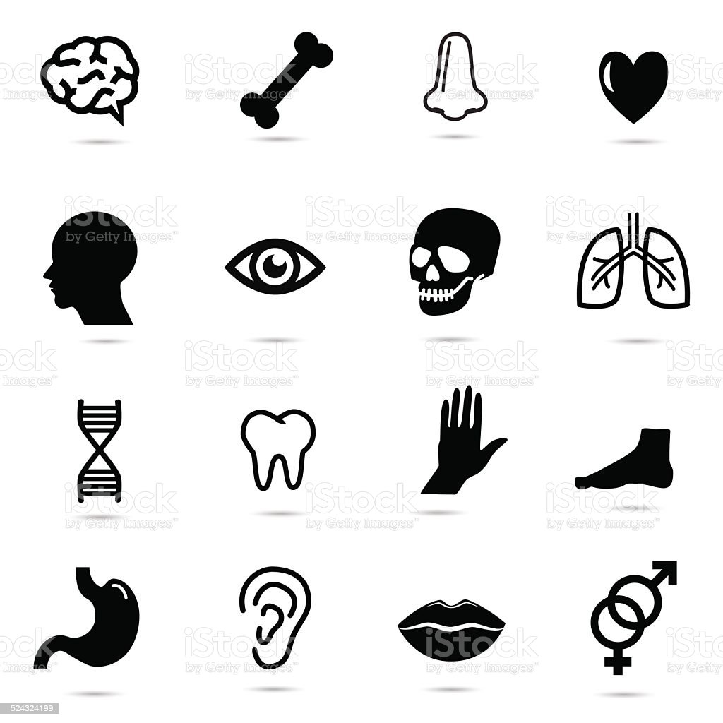 Human body parts. vector art illustration