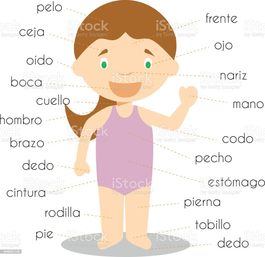 Human Body Parts Vocabulary In Spanish Vector Illustration Stock
