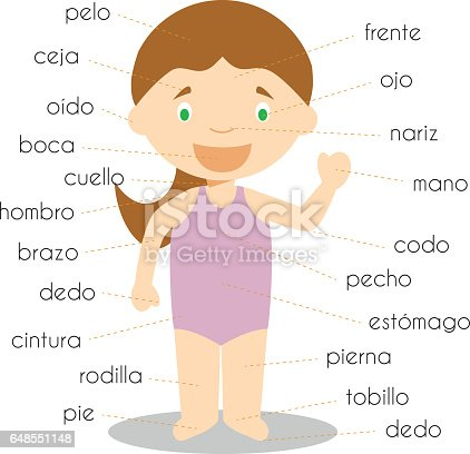 human body parts vocabulary in spanish vector illustration. Black Bedroom Furniture Sets. Home Design Ideas