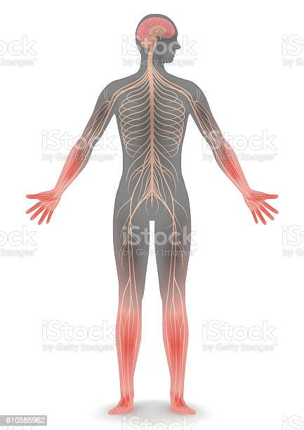 Human body silhouette and sensitivity to cold vector id610585962?b=1&k=6&m=610585962&s=612x612&h= o3t7uw6g8pqrdr f iwz1qdizey41mheos7zrmcxq4=