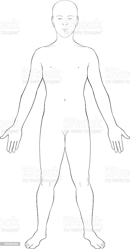 Human Body Surface Anatomy Outline Stock Vector Art More Images Of