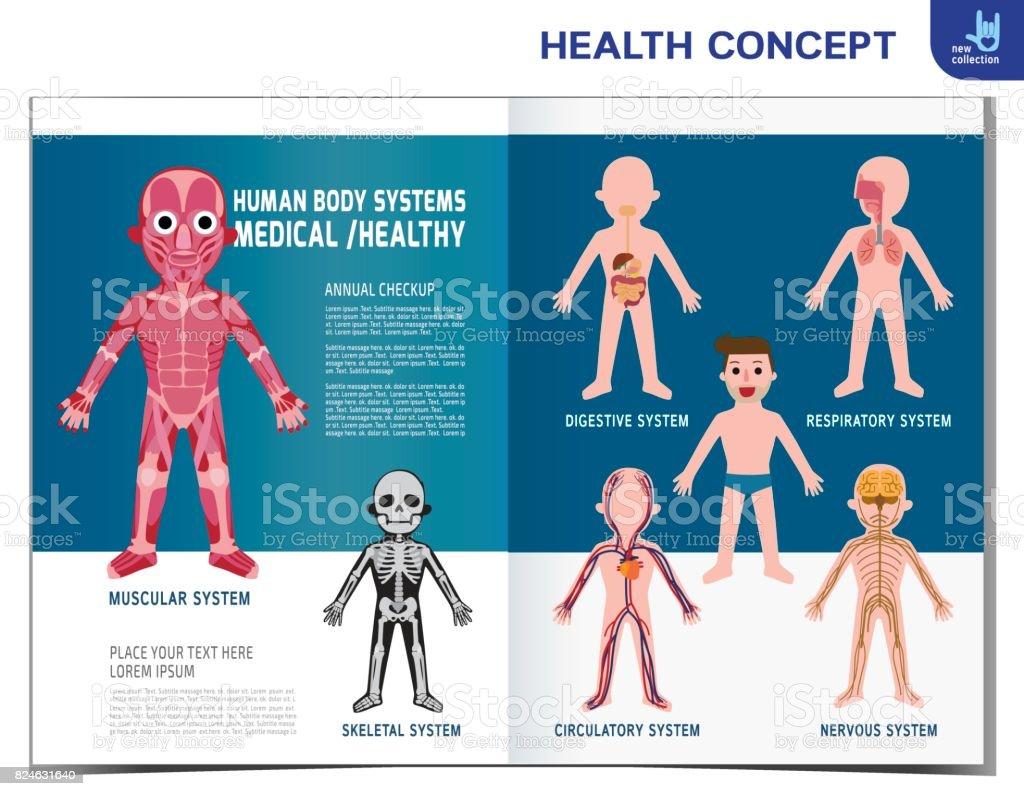 Systeme Des Menschlichen Körpers Anatomieorgel Muskulös Skelett ...
