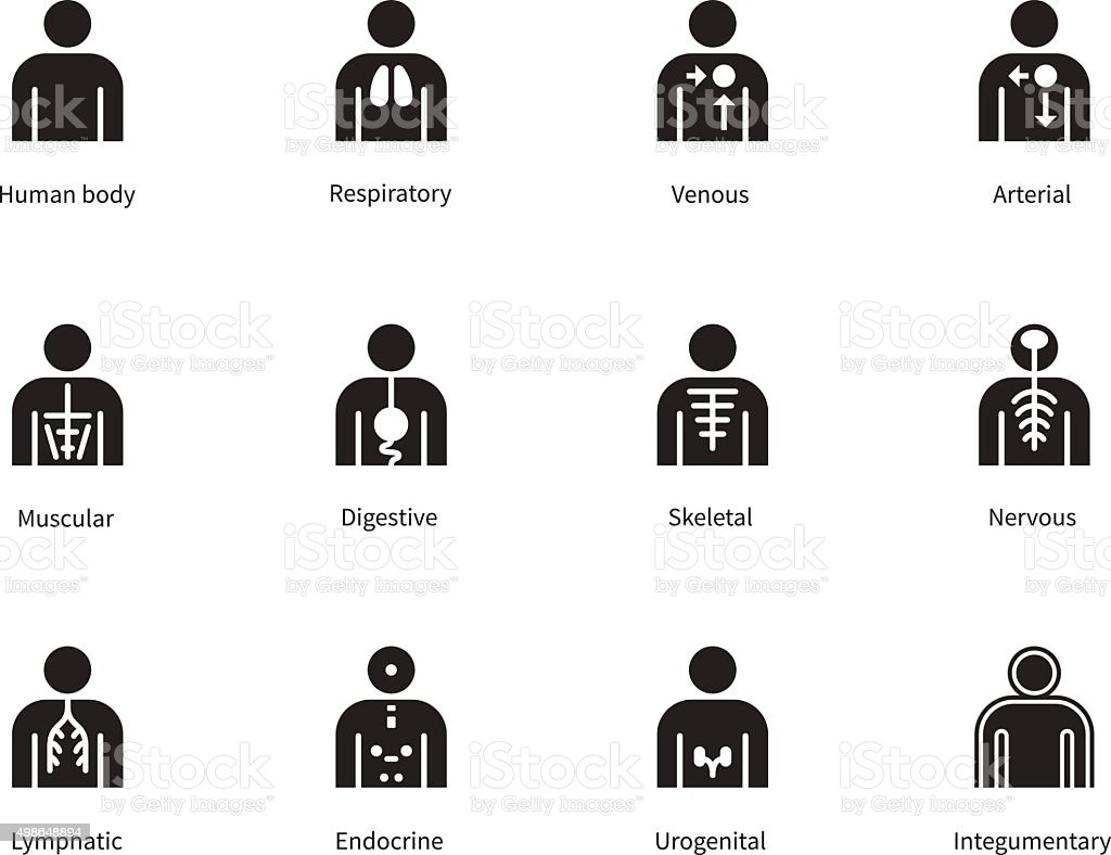 Human Body Systems icons on white background vector art illustration