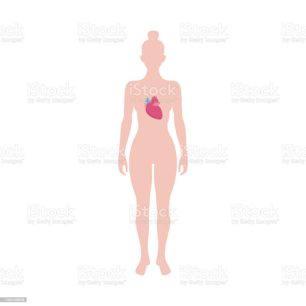 Vetores De Corpo Humano Com Coracao Dentro Diagrama De Medicina De Mulher Em Pe E Mais Imagens De Anatomia Istock