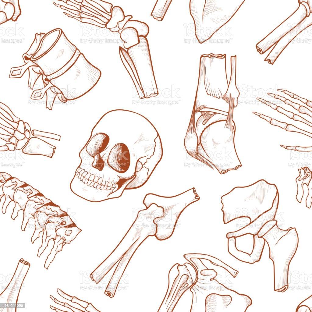 Ziemlich Menschliche Knochen Ideen - Anatomie Von Menschlichen ...