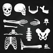 Human bones collection on chalkboard