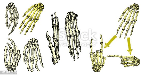 Human Bones Hand Wrists Drawing Set Creation Set With Fingers On ...