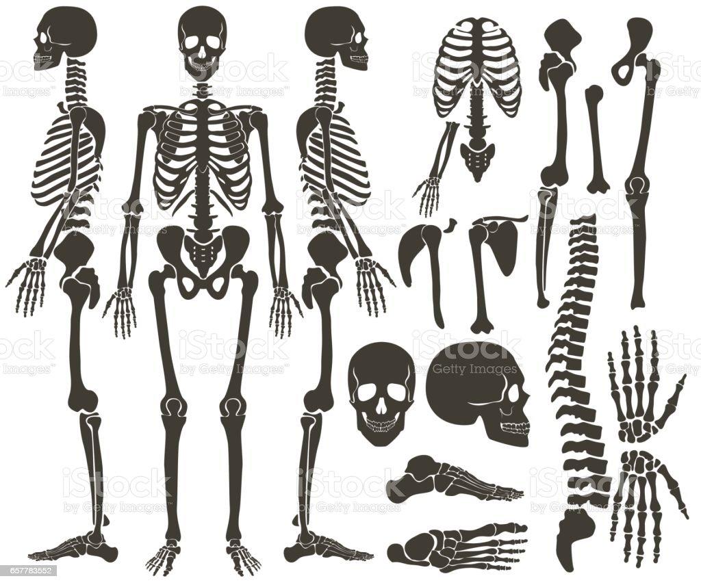 Human Bones Skeleton Dark Black Silhouette Collection High Detailed