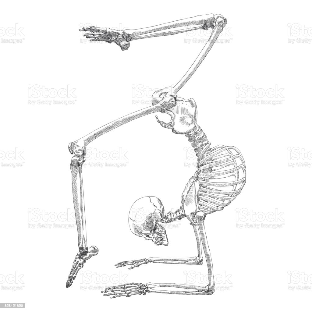 Human Bones Skeleton Drawing Dancing Or Doing Gymnastic With Arms