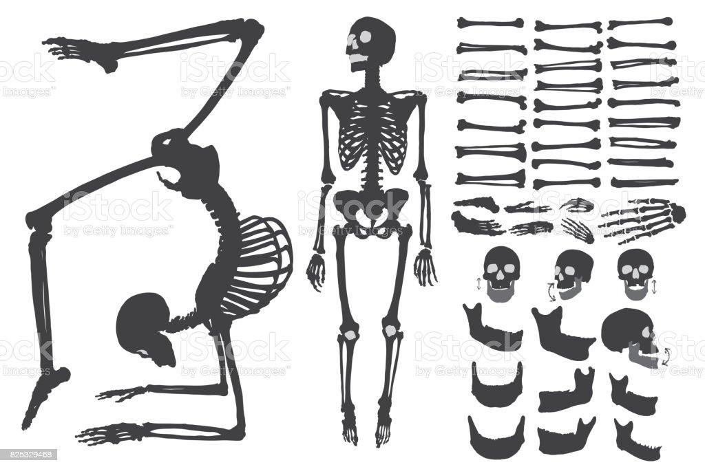 Menschliche Knochen Skelett Silhouette Sammlungssatz ...