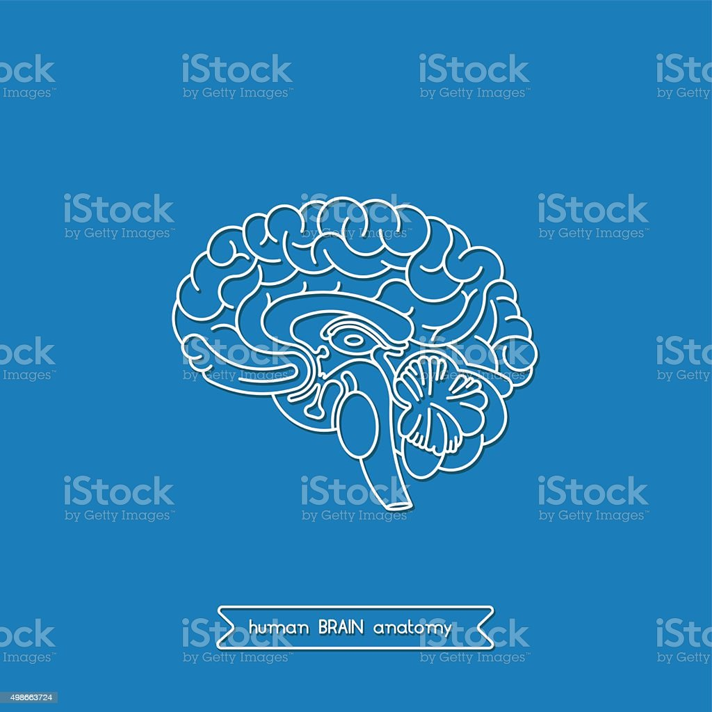 Human brain 1 vector art illustration