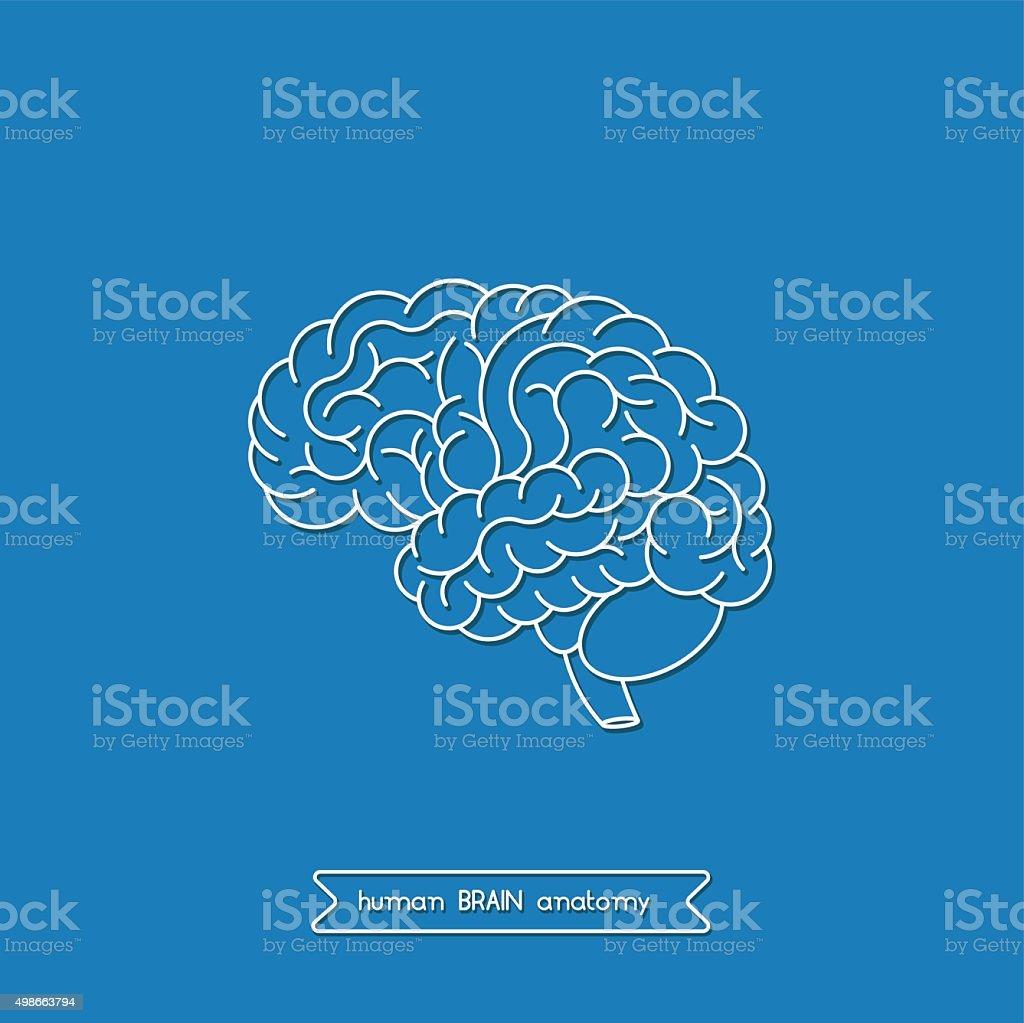 Human brain 2 vector art illustration
