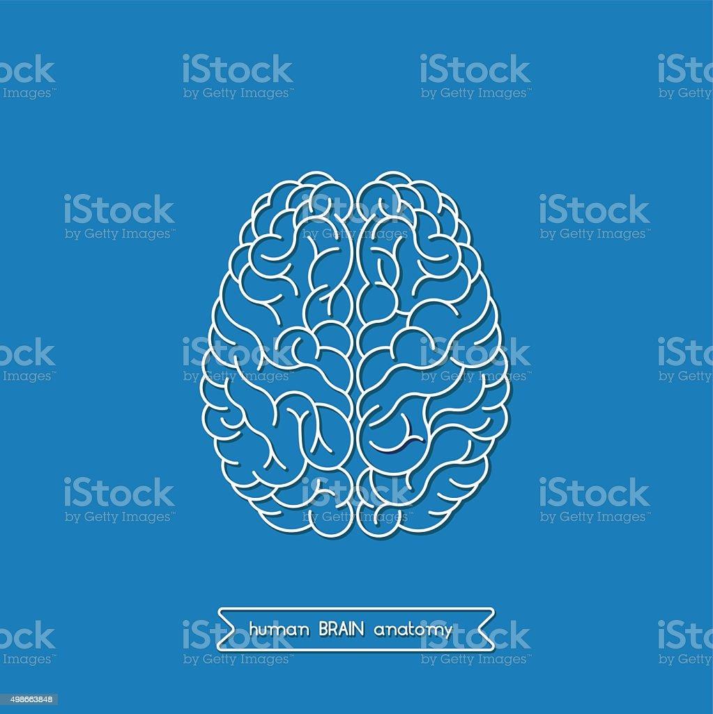 Human brain 3 vector art illustration