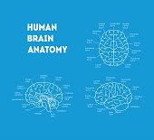 Human Brain Anatomy Card Poster. Vector