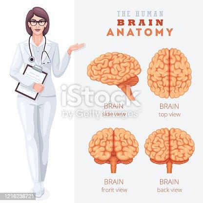 Human brain anatomy. Medical Poster.
