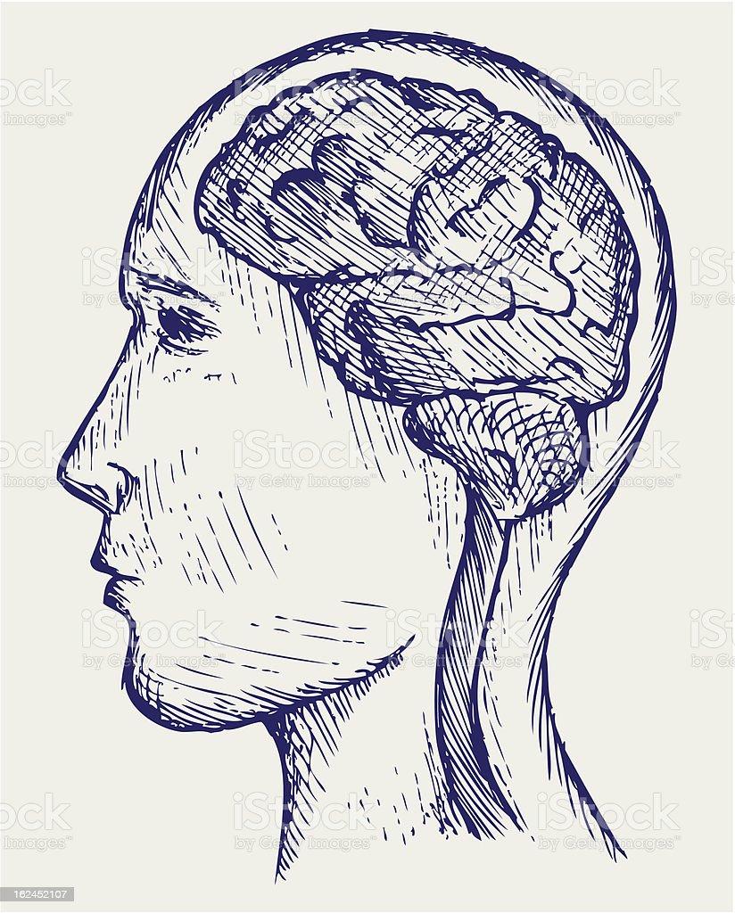 Human brain and head royalty-free stock vector art
