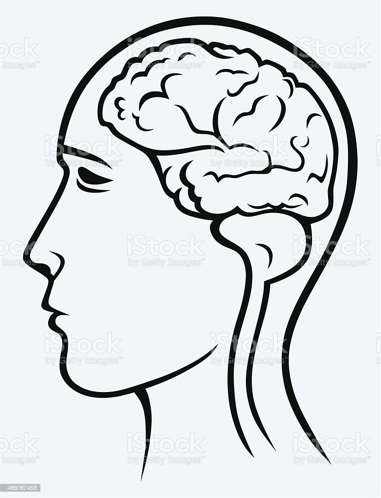 Human brain and head royalty-free stock vector art