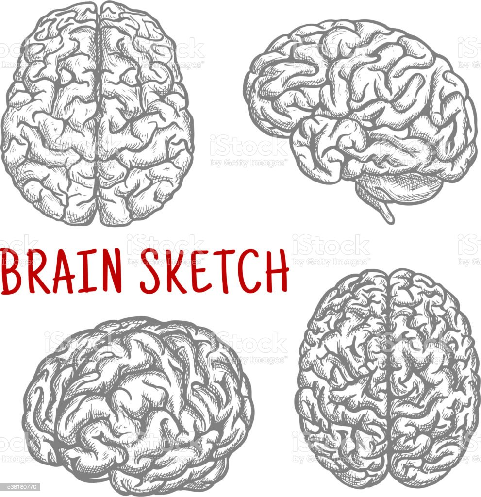 Human brain at different angles engraving sketches vector art illustration