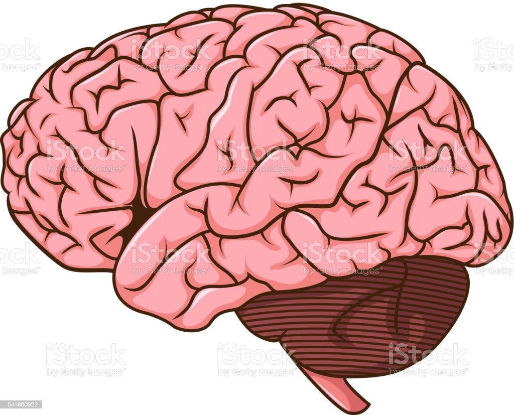 Menschliche Gehirn Comic Stock Vektor Art und mehr Bilder von ...
