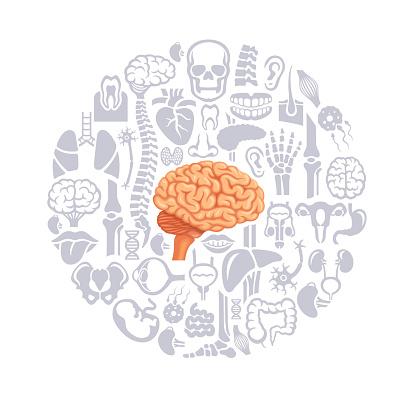 Human brain collage