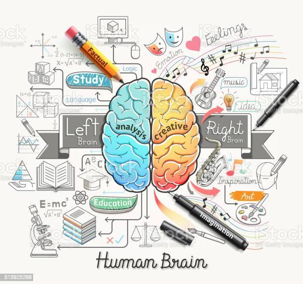 Human Brain Diagram Doodles Icons Style Stock Illustration ...