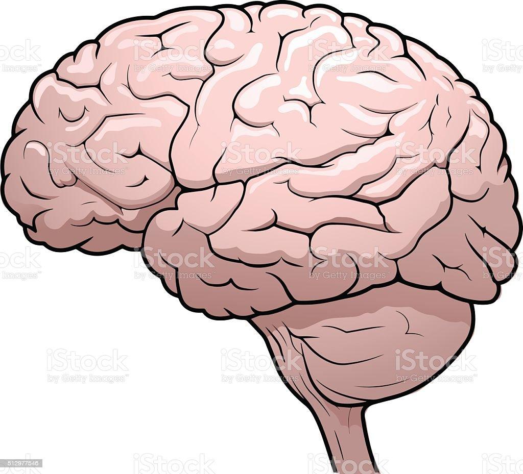 Human Brain Drawing Stock Vector Art More Images Of Brain Stem