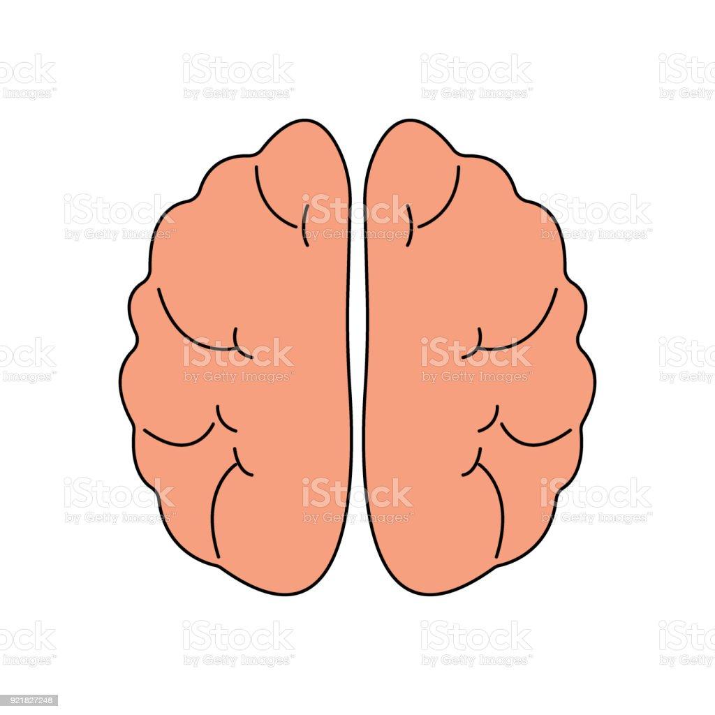 Ilustración de Icono De La Vista Frontal Del Cerebro Humano Símbolo ...