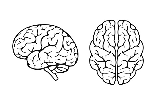 human brain icon set. side and top view. mind, sychology and neurology symbol