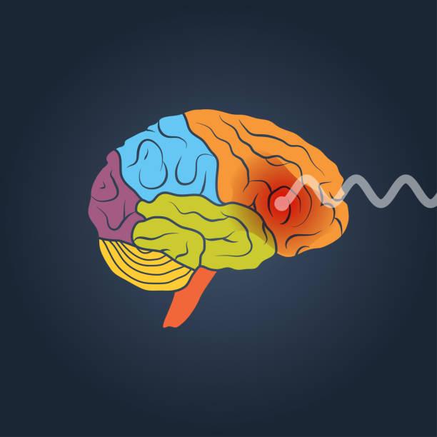 Human brain illustration Profile view of a human brain. Brain activity vector concept parietal lobe stock illustrations