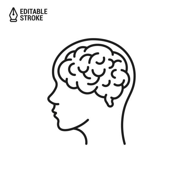 머리에 인간의 뇌. 흰색 배경에서 편집 가능한 선이 분리된 벡터 윤곽선 아이콘 - brain stock illustrations