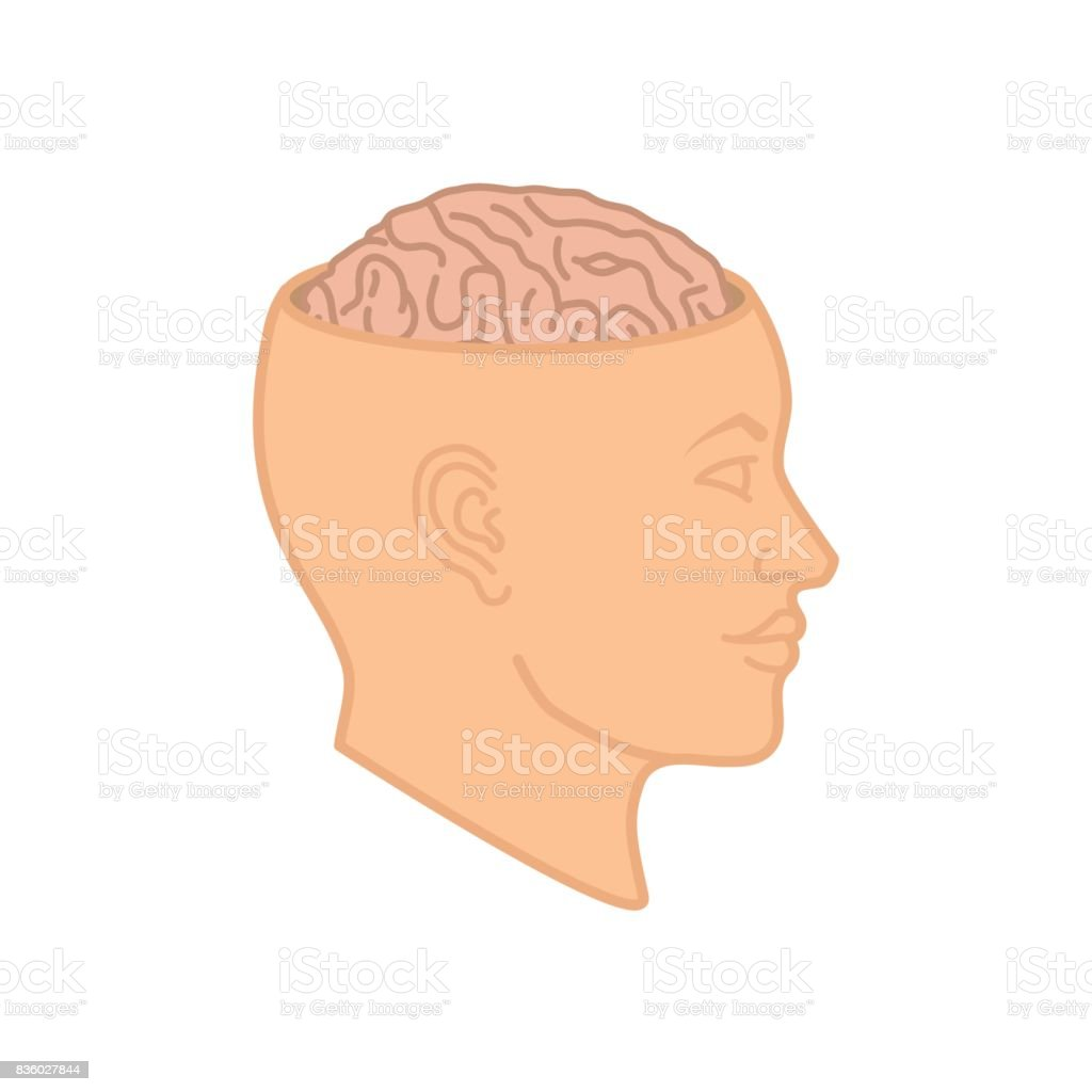 Human brain in the head vector vector art illustration