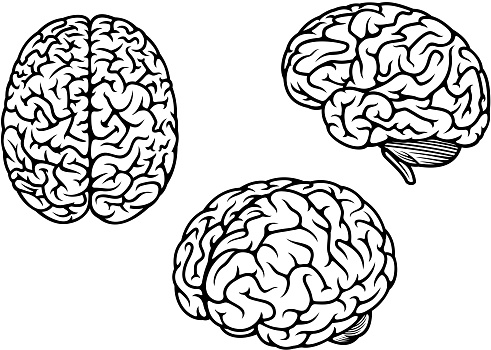 Human brain in three planes for medical design