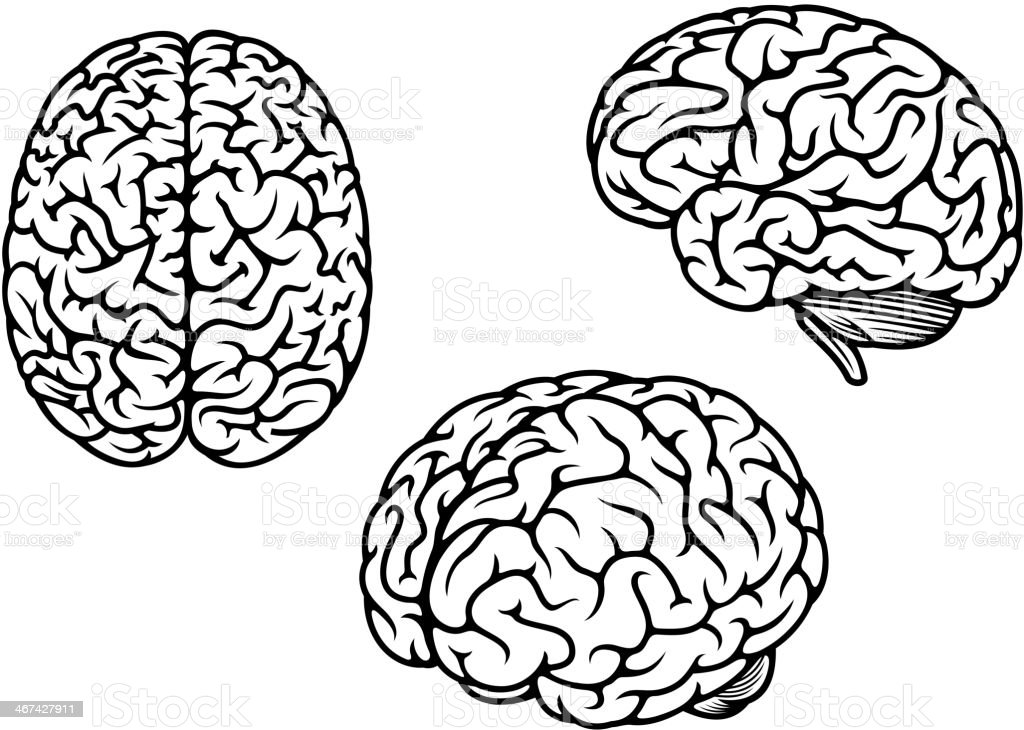 Human brain in three planes vector art illustration