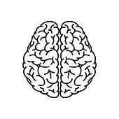Human Brain Outline Top View