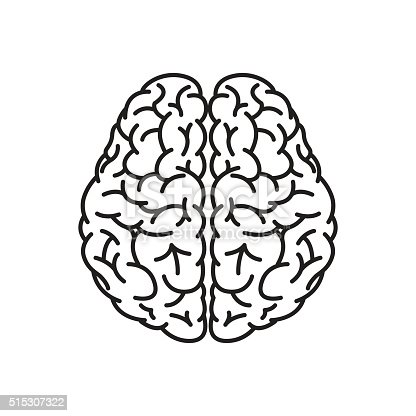 human brain outline top view stock vector art amp more