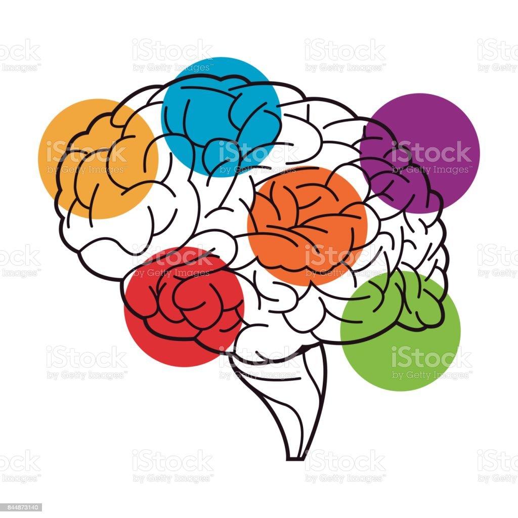 Menschliche Gehirn Funktionen Prozessabbild Stock Vektor Art und ...