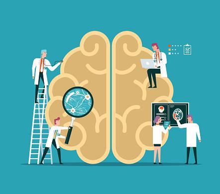 Human Brain - Psychology