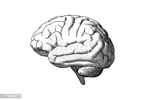 Monochrome engraving human brain drawing side view illustration isolated on white background