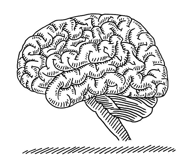 Human Brain Side View Drawing vector art illustration