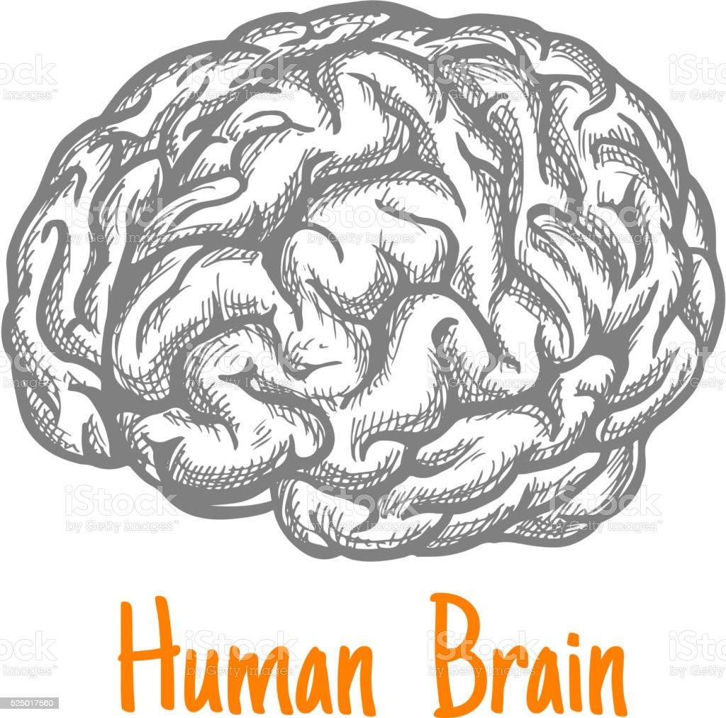 Ilustración de Cerebro Humano Dibujo Símbolo En Colores Gris y más ...