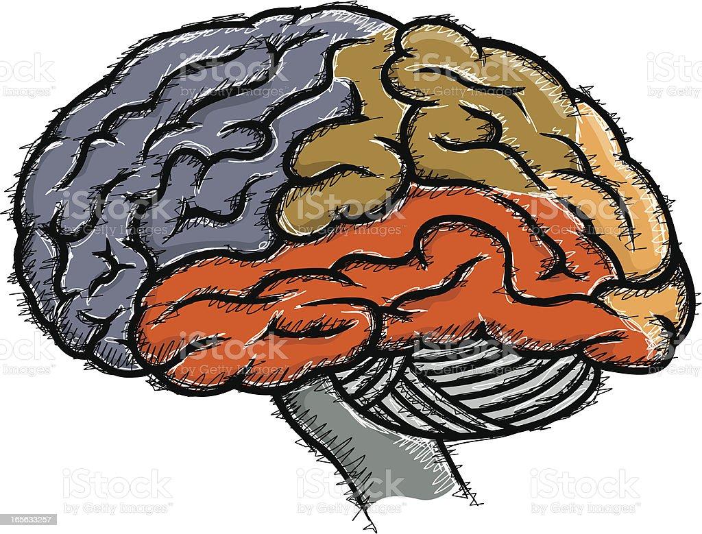 Menschliche Gehirn Skizze Stock Vektor Art und mehr Bilder von ...
