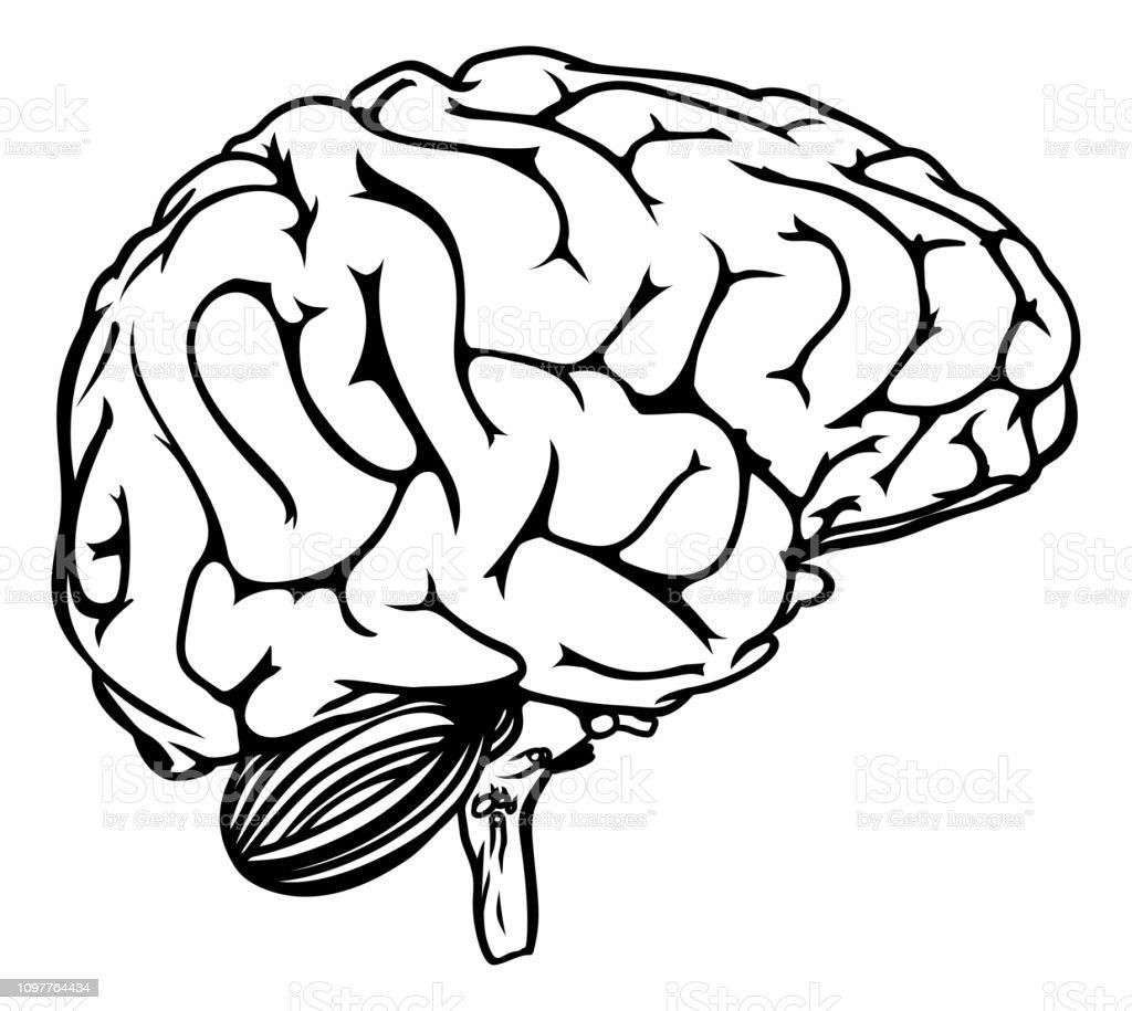 Human Brain - illustrazione arte vettoriale