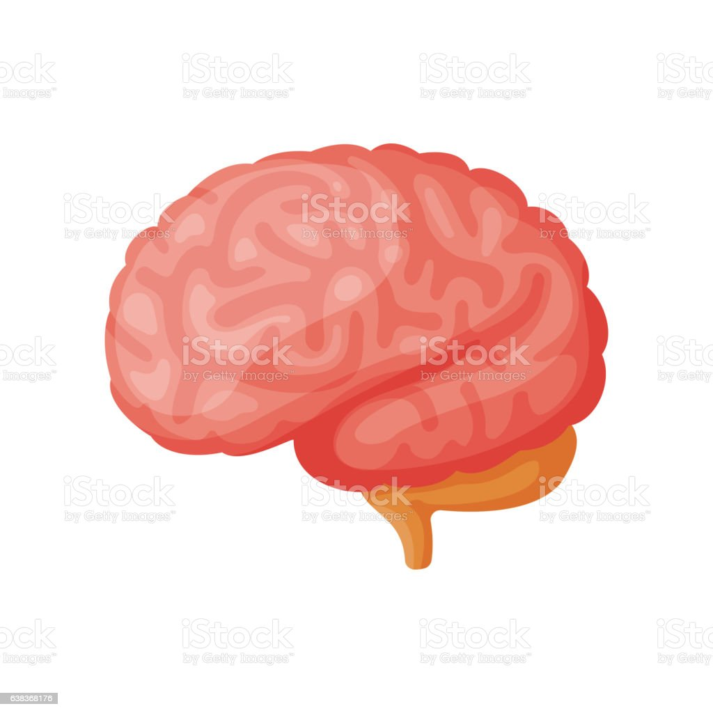 Menschliche Gehirn Vektorillustration Stock Vektor Art und mehr ...