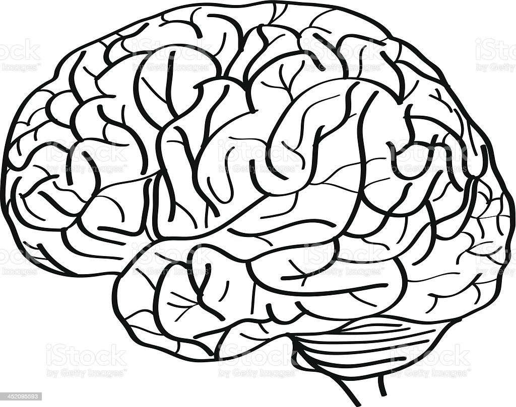 human brain vector outline sketched up stock vector art more rh istockphoto com