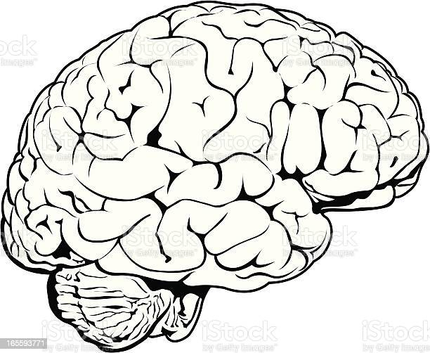 Human Brain Weathered Stock Illustration - Download Image Now